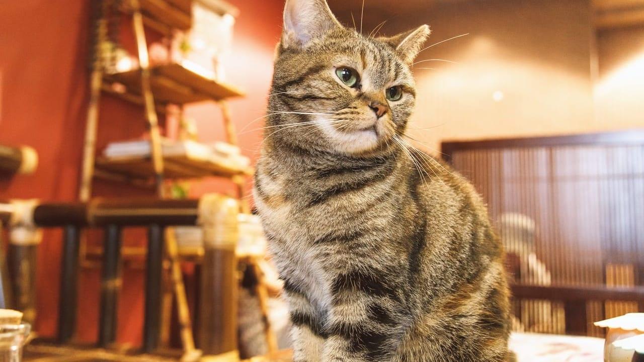 猫カフェの画像