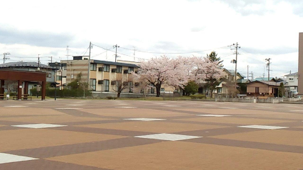 長者まつりんぐ広場 桜